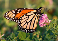 "isposition: form-data; name=""title""Monarch Butterfly"